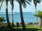 Palm trees on a seashore — Stock Photo