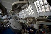 Whale Exhibition — Stock Photo