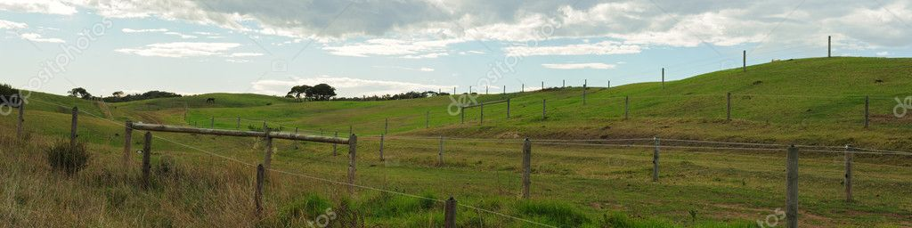 Panorama of the green fields on horse farm with hills, blue sky with clouds and feeding horse in background  Stock Photo #9839148