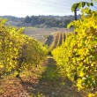 Vineyards and fields in Reggio Emilia hills — Stock Photo