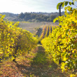 Stock Photo: Vineyards and fields in Reggio Emilihills