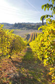Vineyards and fields in Reggio Emilia hills — Stock Photo