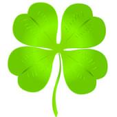 Luck clover — Stock Photo