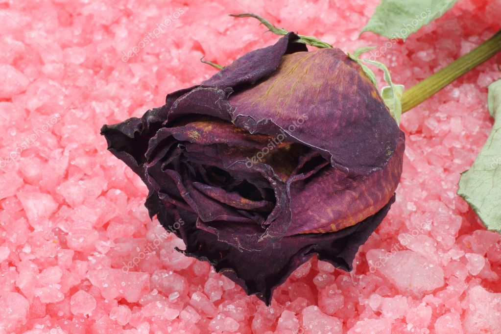 Dry rose on a sea salt close-up — Stock Photo #8255909