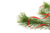 Fir tree branch with red ribbon — Stock Photo