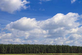 Forest with bright blue sky — Stock Photo