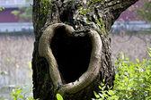Tree hole — Stock Photo