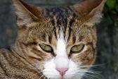 Kitty Cat — Stock Photo