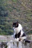 Kitty cat — Stockfoto
