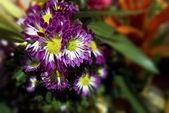 Flore colorée — Photo