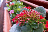 Kleurrijke flora — Stockfoto
