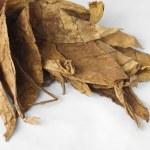 suszonych liści tytoniu — Zdjęcie stockowe