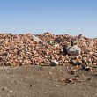 Landfill for disposal of construction waste — Stock Photo