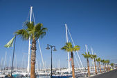 Palm Trees and Masts — Stock Photo