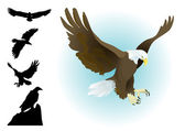 Collection of eagles landing,flying, sitting with silhouettes set — Stock Vector