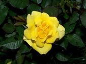 Blüten — Stock Photo