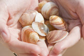 Collection of shells — 图库照片