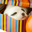 Newborn puppy sleeps — Stock Photo #10280317