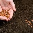 Stock Photo: Two hand holding seeds