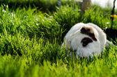 Cachorro deitado em uma grama — Fotografia Stock