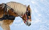 лошадь портрет в зимний период — Стоковое фото