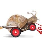 Speedy snail — Stock Photo
