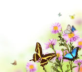 Butterflies in blooming meadow — Stock Photo