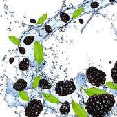 Blackberries splash — Stock Photo