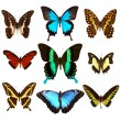 Butterflies — Stock Photo #9007579