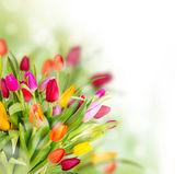 Vårblommor — Stockfoto