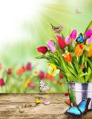 Spring still life — Stock Photo