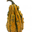 Yellow and Green Gourd — Stock Photo