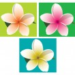 Orange, pink and yellow frangipani on coloured backgrounds in vector format. — Stock Vector