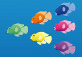 A vector image of jellybean (or parrot) cichlid fish in bright colours. — Stock Vector