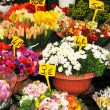 Florist shop — Stock Photo #10264280