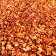 Autumn background — Stock Photo #8387997