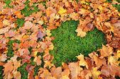 Love autumn — Stock Photo