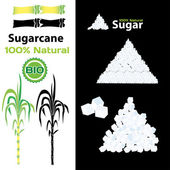 Sugarcane — Stock Vector