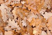 Fallen leaves. — Stock Photo