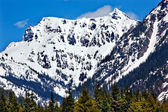 Snowy Mount Chikamin Peak in April Snoqualme Pass Wenatchee Nati — Stock Photo