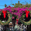Christmas Wreaths Purple Bougainvillea Cactus Garden Old San Die — Stock Photo