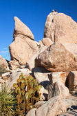 Rock Climb Hidden Valley Joshua Tree National Park California — Stock Photo