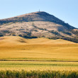Steptoe Butte Yellow Green Wheat Field Blue Skies Palouse Washin - Stok fotoraf