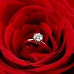anillo de compromiso en rosa roja — Foto de Stock