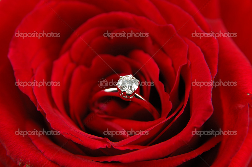 Close up of engagement ring in red rose  Stock Photo #8000636