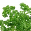 Stock Photo: Close up of fresh parsley