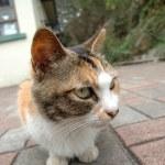Street cat sitting on brick sidewalk — Stock Photo #8821224