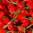 Chilli red peppers — Stock Photo #8872933