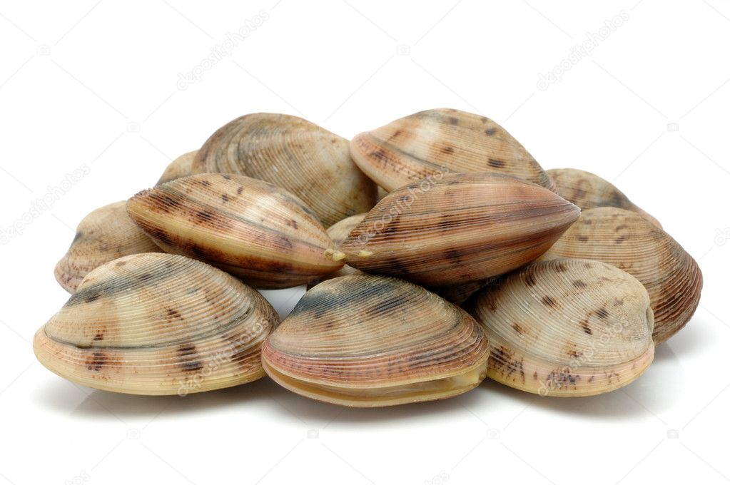 Live clam