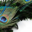 Peacock feather eye — Stock Photo #9147007